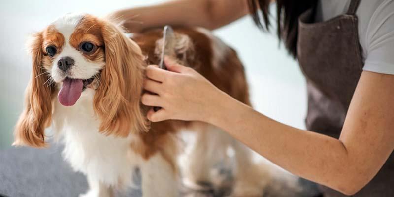 spazzolare il cane-2-800x400