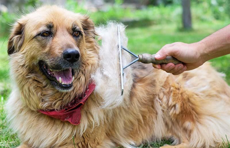 spazzolare il cane-3-800x400