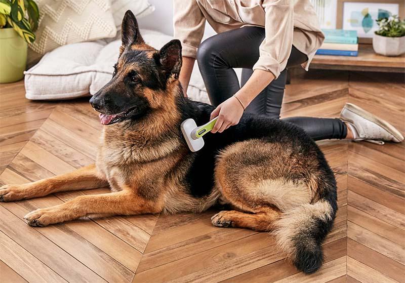 spazzolare il cane-5-800x400