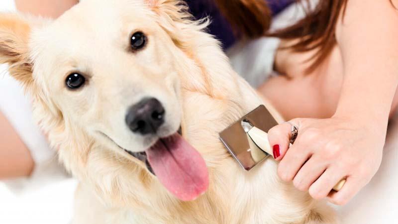 spazzolare il cane-8-800x400