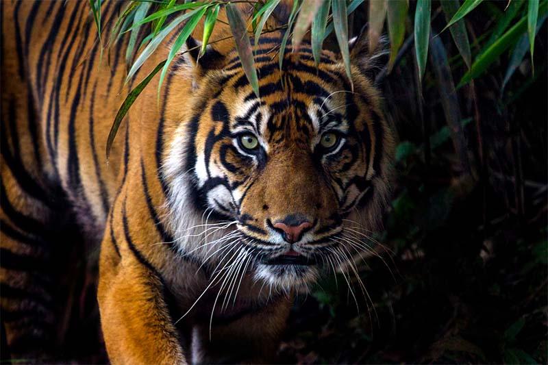 tigre-2-800x400