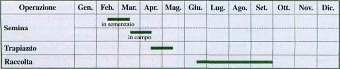Maggiorana 3-800x400