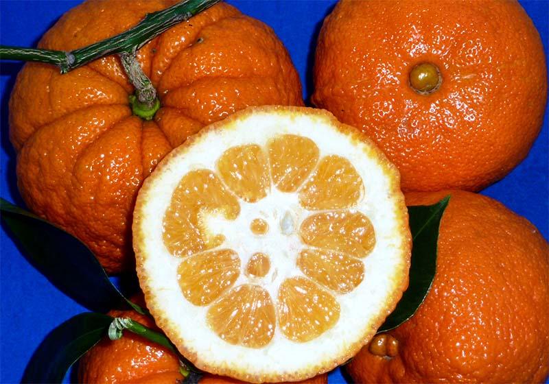arancia-amara-3-800x400