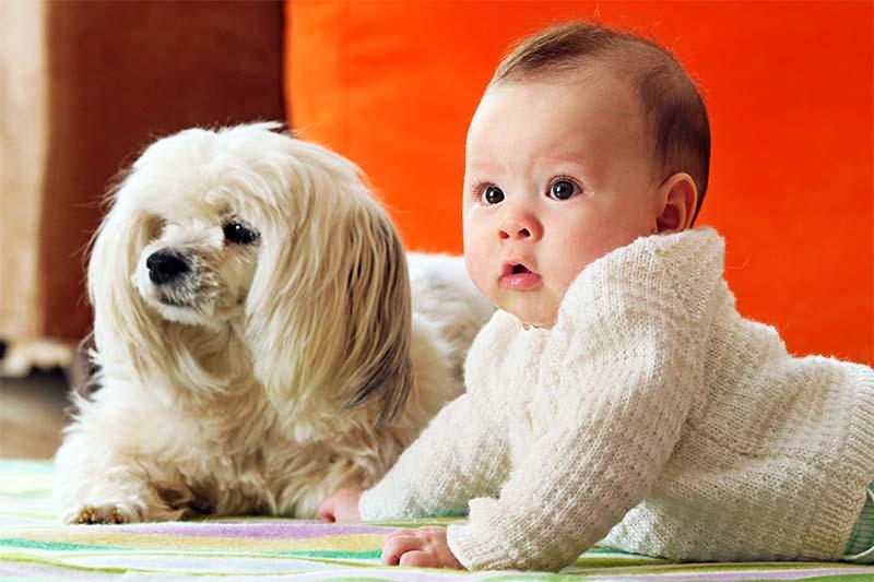 cane e bambino-10-800x400