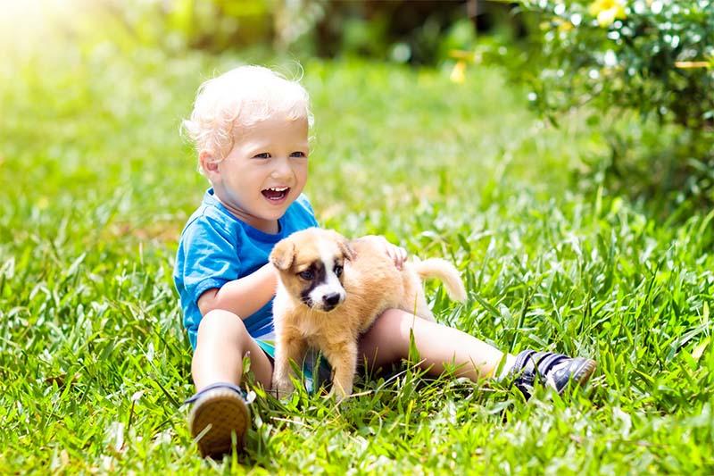 cane e bambino-14-800x400