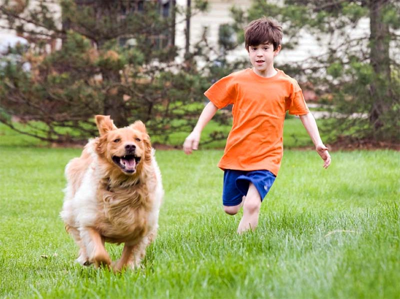 cane e bambino-16-800x400