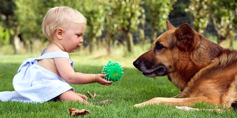 cane e bambino-2-800x400