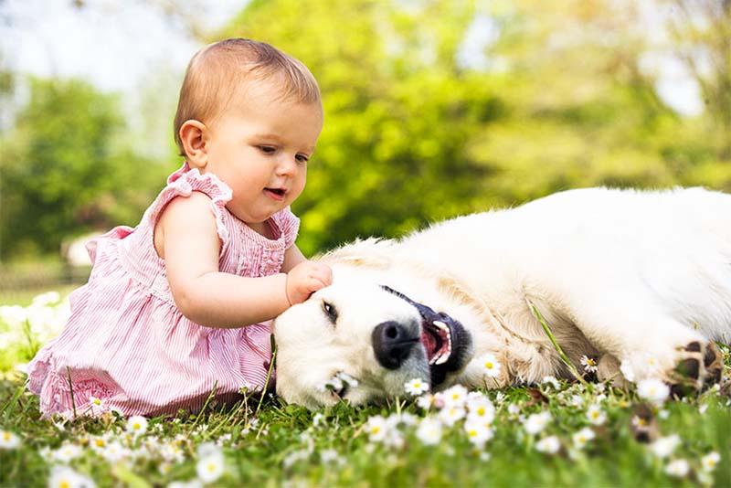 cane e bambino-3-800x400