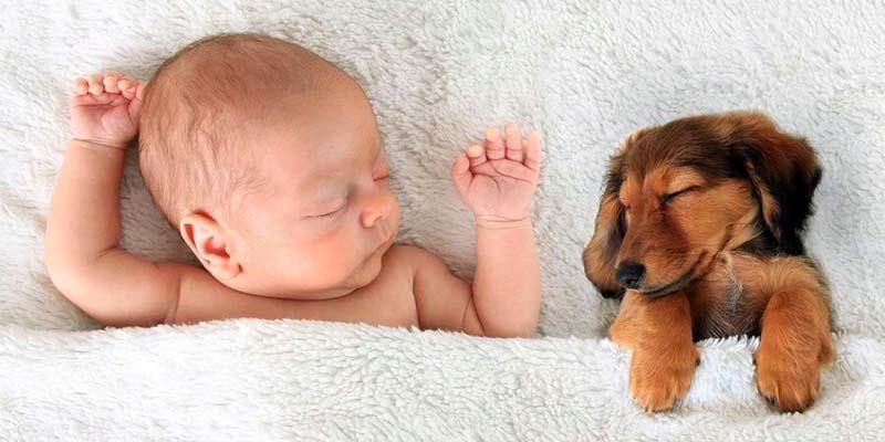 cane e bambino-4-800x400