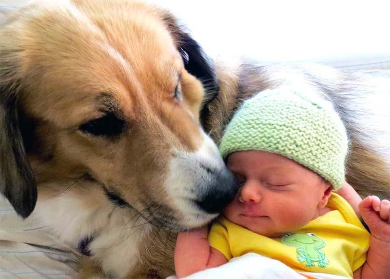 cane e bambino-5-800x400