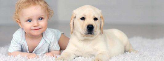 cane e bambino-6-800x400