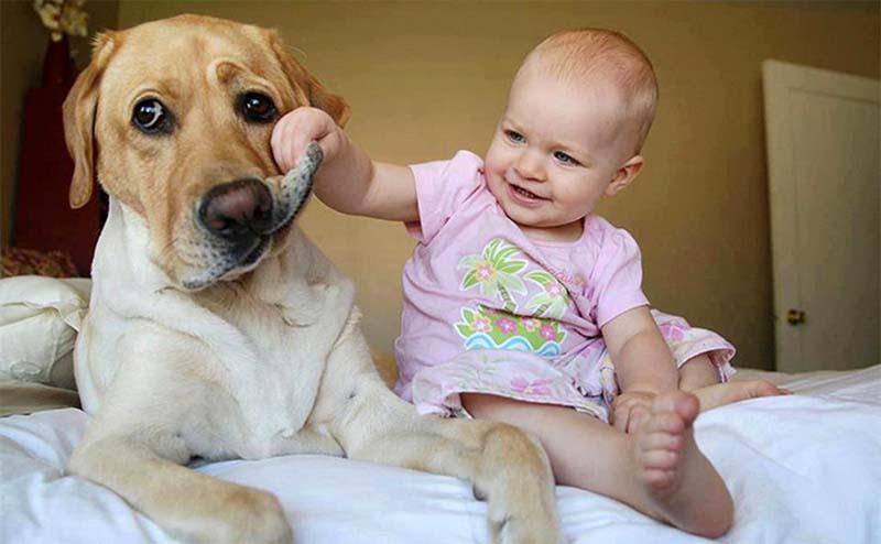 cane e bambino-7-800x400