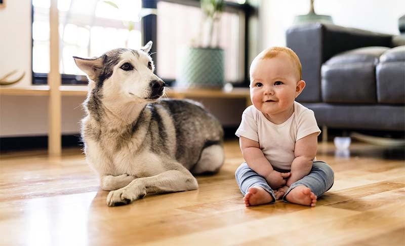 cane e bambino-8-800x400