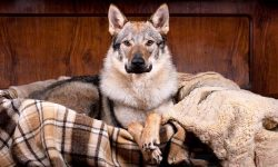 cane, un predatore in salotto-1-800x400