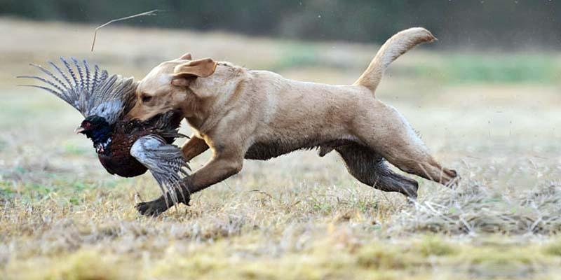 cane, un predatore in salotto-3-800x400