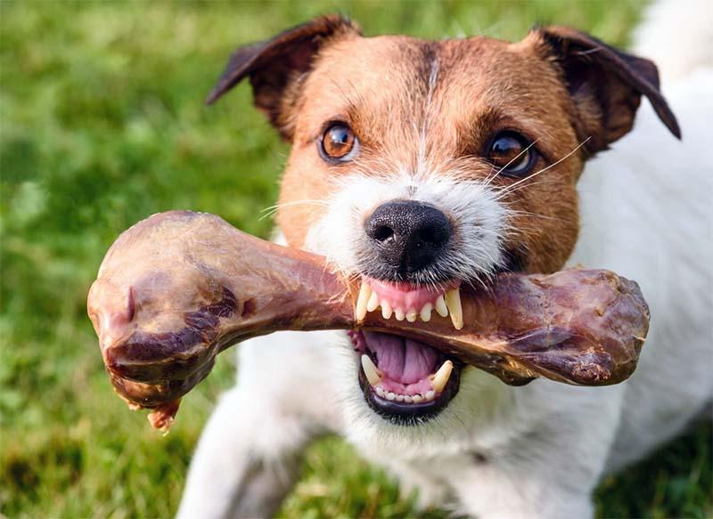 cane, un predatore in salotto-4-800x400