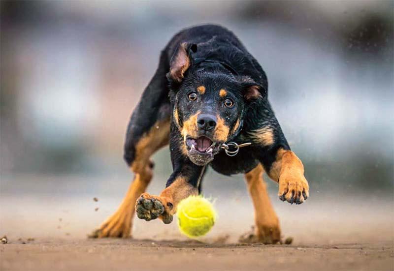 cane, un predatore in salotto-7-800x400