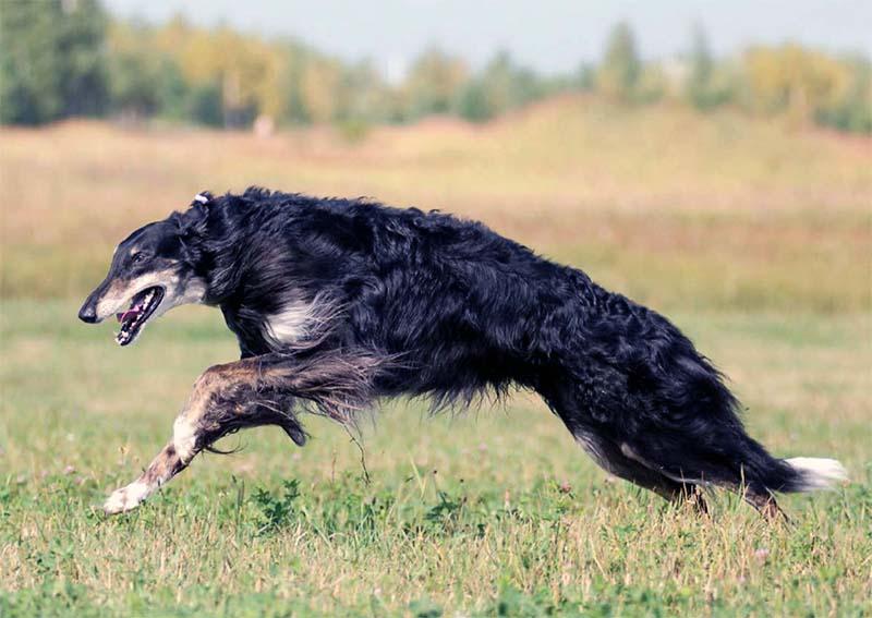 cane, un predatore in salotto-8-800x400