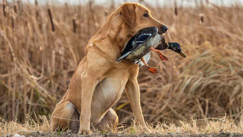 cane, un predatore in salotto-9-800x400