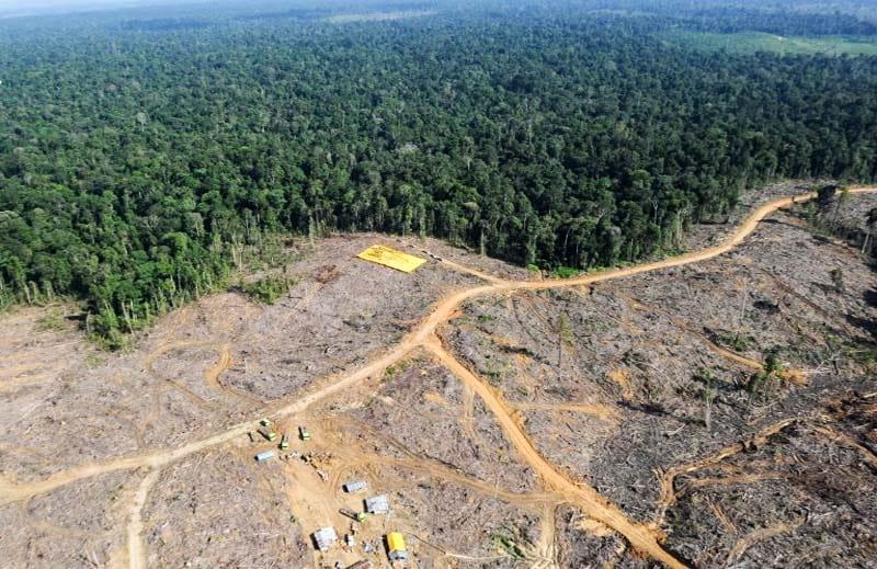 deforestazione indonesia