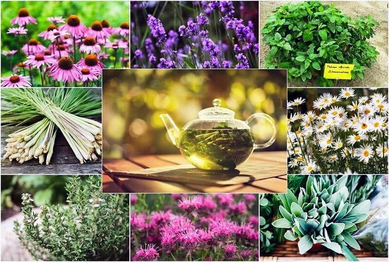 piante aromatiche-officinali-1-800x400
