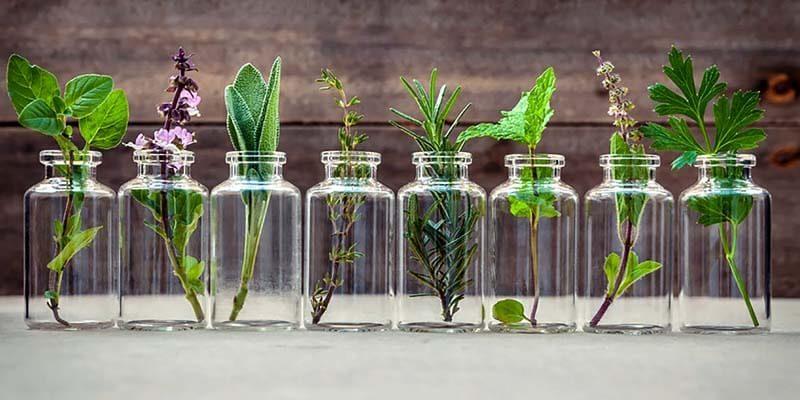 piante aromatiche-officinali-3-800x400