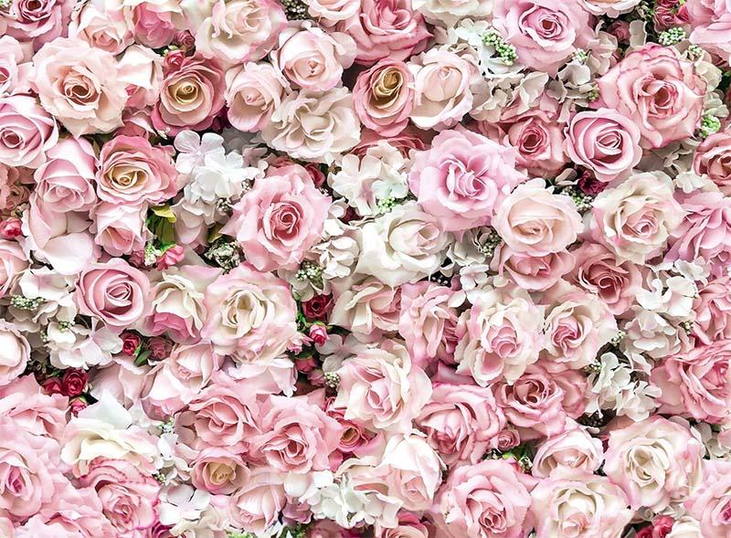 rosa-2-800x400