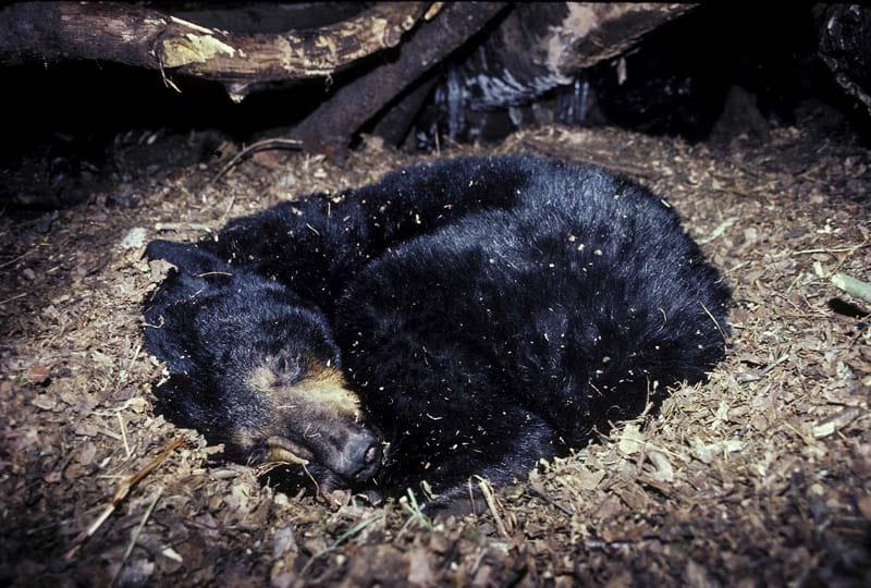 animali letargo-1-800x400