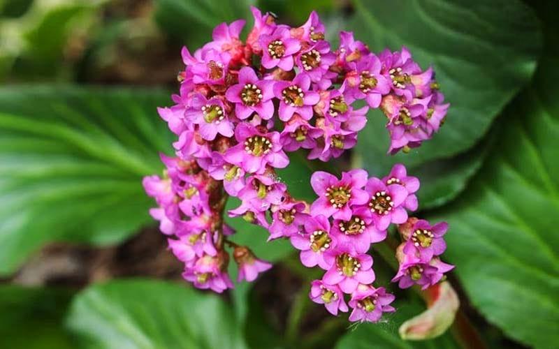 piante della nonna-3-800x400