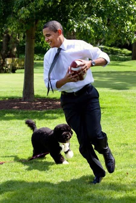 Bo cane di Barack Obama