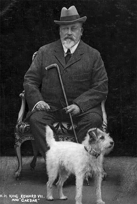 Caesar cane di Edoardo VII