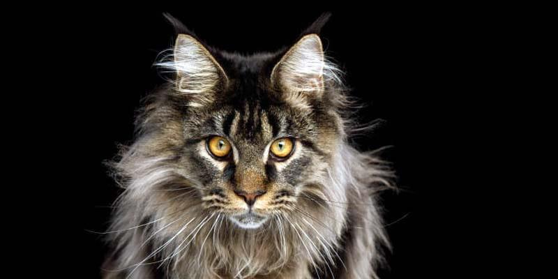 Il gatto-1-800x400