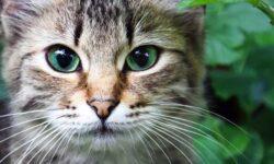 Il gatto-11-800x400