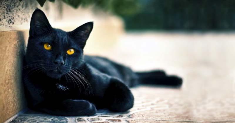 Il gatto-nero-8-800x400
