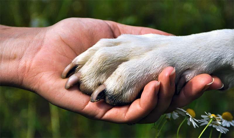 cane discende dal lupo-7-800x400
