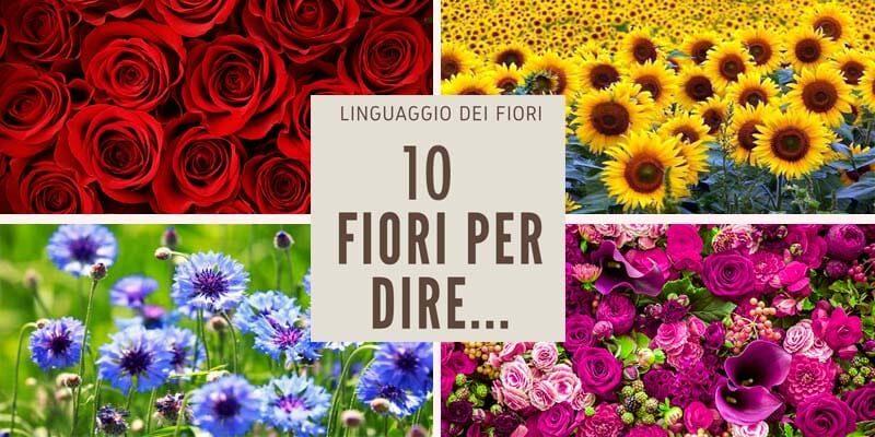 messaggi nascosti fiori4-800x400