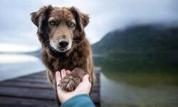 amicizia cane uomo-1-800x400