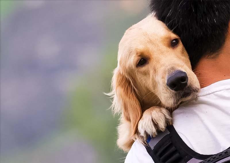 amicizia cane uomo-3-800x400