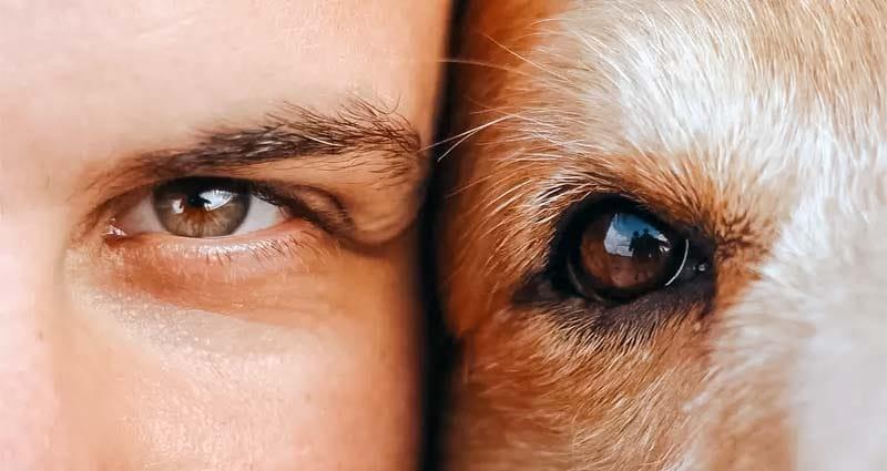 amicizia cane uomo-4-800x400