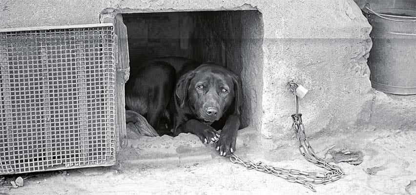 cane a catena-10-800x400