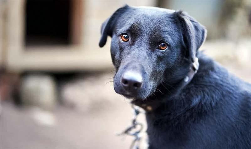 cane a catena-11-800x400