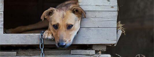 cane a catena-2-800x400