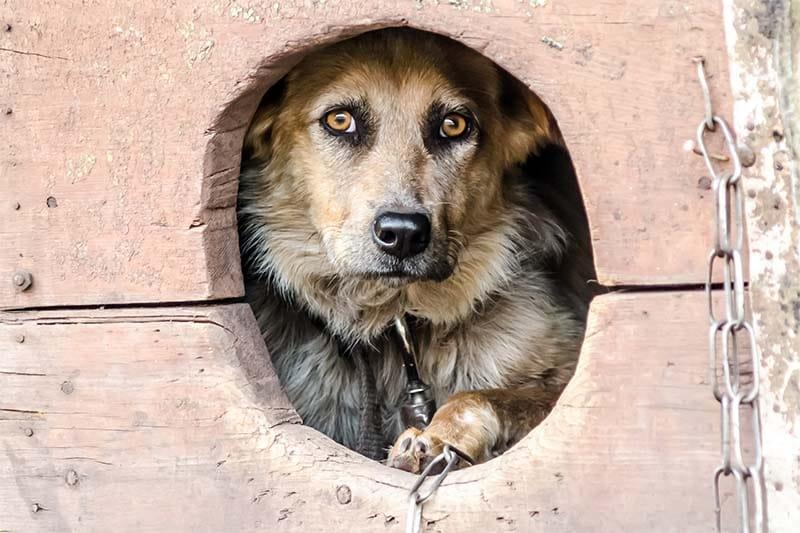 cane a catena-6-800x400