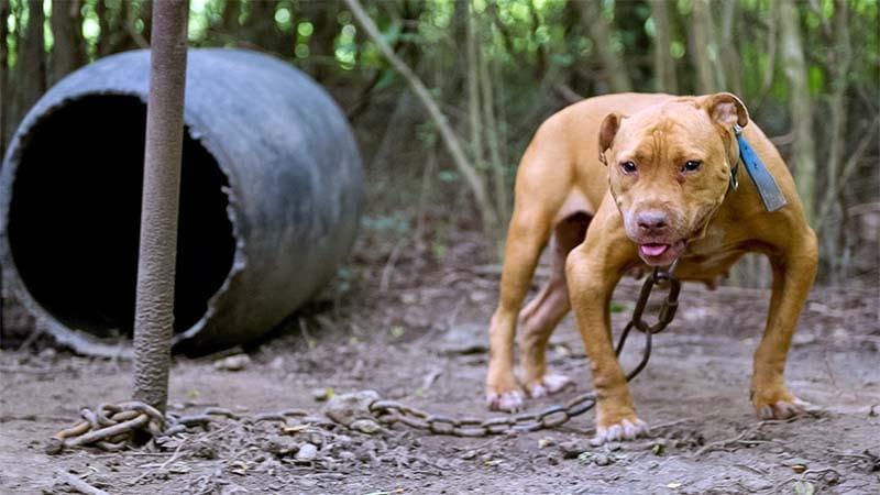 cane a catena-7-800x400