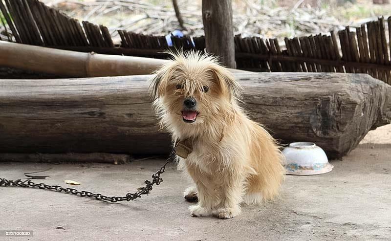 cane a catena-9-800x400