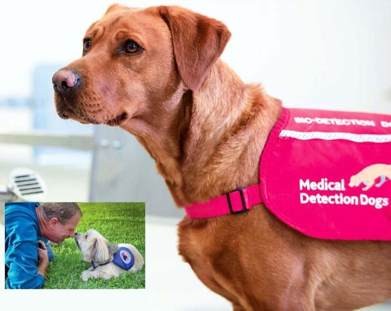 cane scopi medici