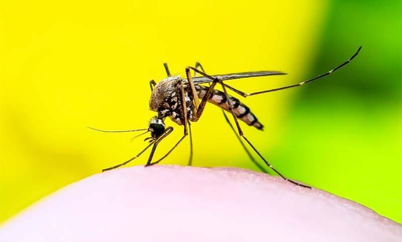 zanzara-10-800x400