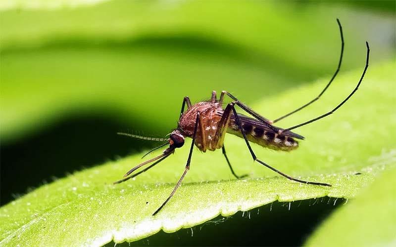 zanzara-11-800x400
