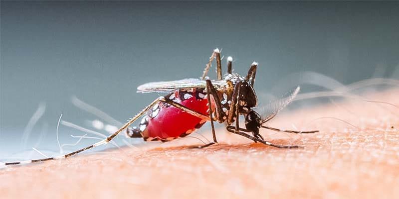 zanzara-17-800x400