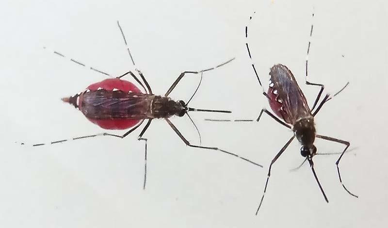 zanzara-19-800x400